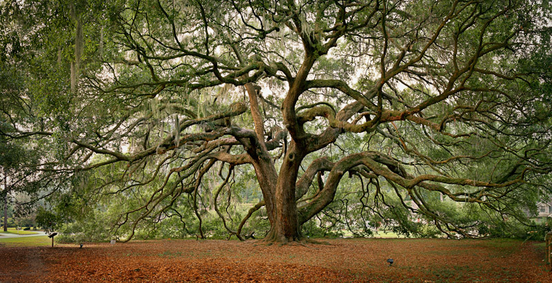 1. The Majestic Oak, Majestic Oaks Housing Development, Savannah